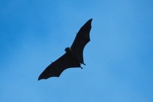 Ultrasonic waves are emitted by the cane in a similar way to how bats detect their insect prey. Photo / Thinkstock