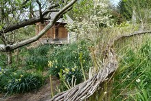 In Mike Lilian's garden  live willow is used to fence off the orchard. Photo / Supplied
