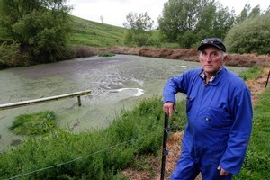 Dairy Farmer Stew Wadey has had to tip 4000 litres of milk into ponds on his Matamata property because of the leak. Photo / Christine Cornege