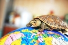 Dennis the travelling turtle's return has made a heap of kids in Dannevirke happy. Photo / Thinkstock
