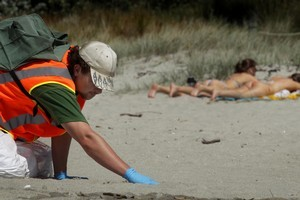 Sunbathers can enjoy Mt Maunganui beach, but the arduous hands-and-knees job of clearing fuel oil washed ashore from the Rena will drag on ... and more pollution could come if the ship breaks up. Photo / Alan Gibson