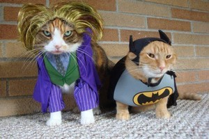 Holy Batcat: A cat-lover who is also a Batman fan knows just what to do for Halloween. (Source: Best Week Ever)