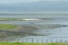 The shores of the Manukau Harbour. File photo / Paul Estcourt