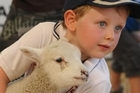 A young boy strikes a pose with a lamb at the Canterbury A & P Show. Photo / Liz Light