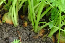 Knowing the condition of your soil is key to good growth in the garden.