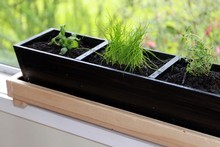 Greig Morgan's herb planter. Photo / Doug Sherring