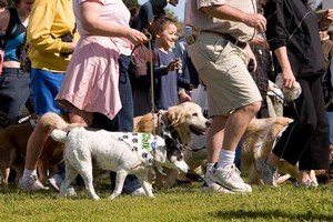 People with a four-legged friend are likely to be fitter - and happier. Photo / Supplied
