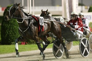 Bettor Cover Lover has recovered from a serious injury. Photo / Greg Bowker