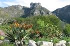 Table Mountain, as seen from Kirstenbosch. Photo / Jill Worrall