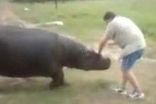 The hippo, called Humphrey, mauled his owner, Marius, to death. Photo / Supplied