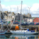 Boats crowd Shetland's main port at Lerwick. Shetland Islands. Photo / Susan Buckland