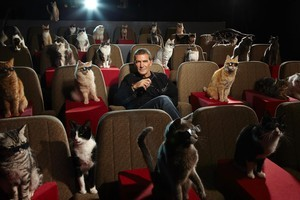 Antonio Banderas' role as the title character in Puss in Boots is small in stature but larger than life. Photo / Supplied