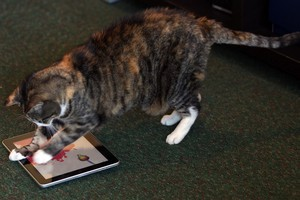 Mrs lilla plays 'Paint for Cats' on the scratch-resistant iPad. Photo / Janna Dixon