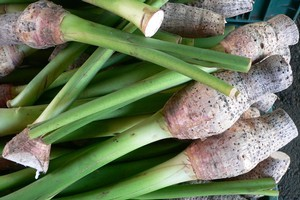 Edible taro can be bought from Pacific Island food stores or markets and grown in your own backyard. Photo / Supplied