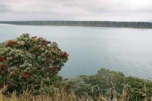 Matakana Island. Photo / Sarah Ivey