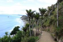 The Mangawhai Cliffs walkway provides superb views of the coast, often framed by stands of nikau palm. Photo / Jim Eagles