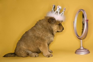 A new robot can do what dogs can't - recognise its own image in a mirror. Photo / Thinkstock
