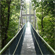 The 250m suspension bridge at the MacRitchie Reservoir. Photo / Kieran Nash