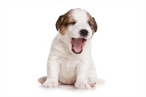 Yawning when your best friend yawns indicates you really care for them, according to scientists. Photo / Thinkstock
