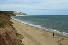 The cliffs at Yaverland on the Isle of Wight are packed with fossils. Photo / Creative Commons image by Simon Haytack