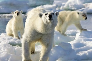 A scene from Frozen Planet. Photo / Supplied