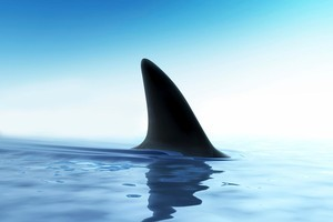 A shark was spotted at Papamoa Beach yesterday.  Photo / Getty