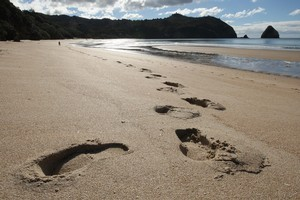 New Chums Beach on the Coromandel Peninsula. Photo / NZ Herald