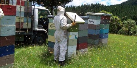 Inclement weather meant a shortage of manuka honey for Comvita. Photo / Supplied