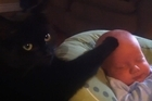 Stewie the cat soothes baby Connar Grant to sleep in the this clip from Youtube. Still picture / Supplied