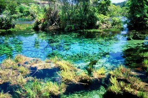 Te Waikoropupu Springs in Golden Bay is not as clear as the Blue Lake in Nelson. Photo / Supplied