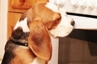 An internet advertisement where puppies are placed in an oven shows a