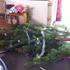 Our Xmas tree. Photo / Twitter / Naomi Peters
