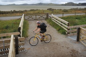New Zealand Herald reporter Mathew Dearnaley rides the Pou Herenga Tai - Twin Coast cycle trail that runs from Okaihau to Kaikohe on the old rail line that joined the two small far north towns. Photo / Greg Bowker