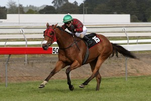 Don Walker is hoping for another winning effort from Postmans Daughter on Sunday. Photo / Supplied