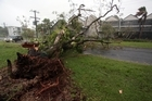 A tree is seen uprooted in the resort town of North Mission Beach, Australia in the aftermath of Cyclone Yasi. Photo / NZ Herald