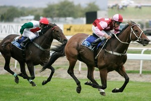 Sir Slick, pictured winning the 2008 Awapuni Gold Cup, was one of Volksraad's best sons in New Zealand. Photo / NZPA