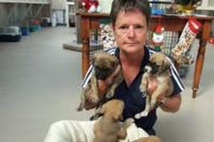 SPCA inspector Helen Saunders, of Alexandra, with a litter of nine puppies found dumped beside Lake Dunstan on December 23. Photo / Lynda Van Kempen.