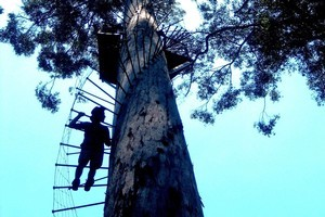 The Dave Evans Bicentennial Tree is a lookout for the adventurous. Photo / Robin Esrock