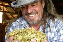 Guy Coddington holds a handful of dried hop flowers. Photo / Victoria Clark