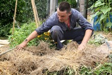 Don't leave your soil exposed: cover it with a layer of straw mulch or a green crop. Photo / Natalie Slade