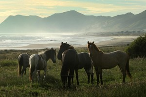 Horses often have East Cape beaches to themselves. Photo / Alan Gibson