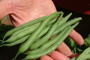 Vegetables such as beans will be happier  if you rotate your crops. Photo / Supplied