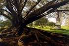 A painting of Auckland Domain by Sam Foley. Photo / Supplied