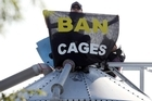 Protesters chained themselves to silos on a battery hen farm early yesterday morning. Photo / NZPA