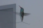 AeroVironment have developed the Nano Hummingbird aerial reconaissance vehicle for DARPA. Photo / Supplied