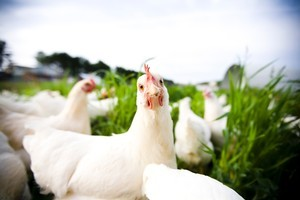 At least half the space on the egg shelf is now devoted to free range, organic and barn varieties. Photo / Thinkstock