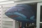 Friendly shark. Photo / Supplied