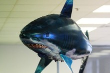 The helium-filled, inflatable sharks were popular Christmas gifts. Photo / Greg Bowker