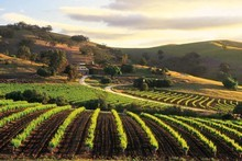 Bethany Wines in the Barossa Valley offers spectacular scenery as well as great wines. Photo / Supplied