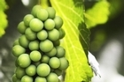With a bit of early-summer attention the grapevine will flourish while you are away. Photo / Thinkstock